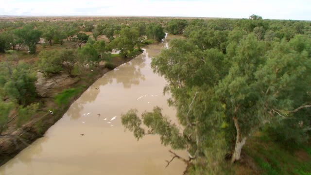 WS AERIAL Flock of birds flying over river with trees around / Innamincka, South Australia, Australia