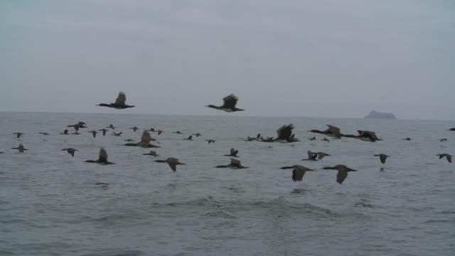 vídeos de stock e filmes b-roll de flock of birds flying over sea surface, high speed pan - majestoso