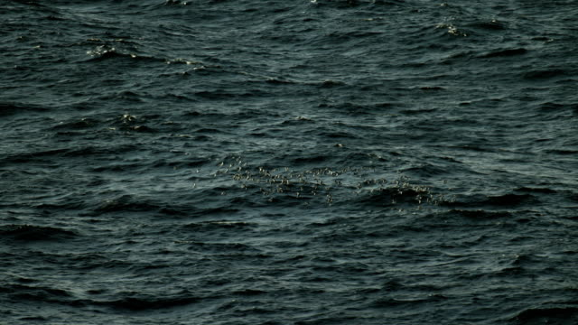 flock of birds flying over the sea - grey colour stock videos & royalty-free footage