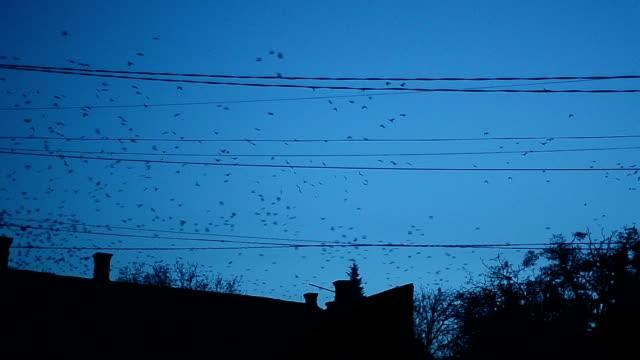 Flock of birds flying - Stock Video