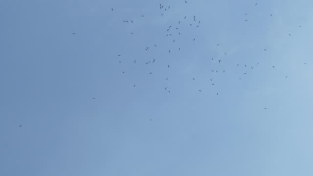 stockvideo's en b-roll-footage met kudde vogels in de lucht - white color