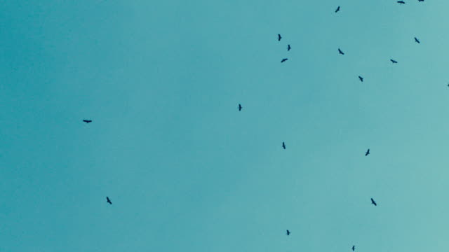 flock of birds in the sky - group of animals stock videos & royalty-free footage