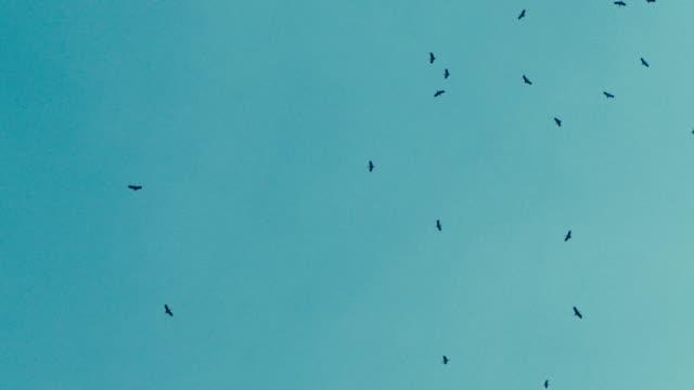 stockvideo's en b-roll-footage met kudde vogels in de lucht - groep dieren