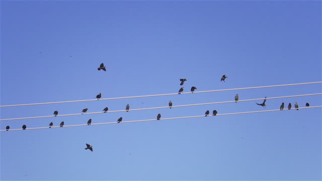 flock of birds on telephone wire, slow motion, daytime. - linea telefonica video stock e b–roll