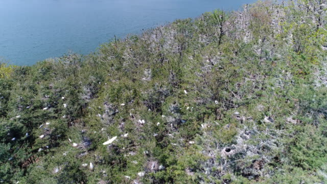flock of birds on trees / gyeonggi-do, south korea - bird watching stock videos & royalty-free footage