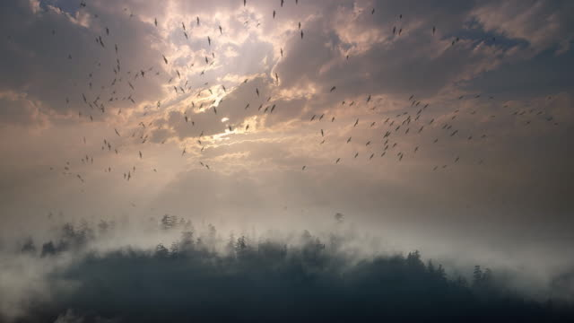 Flock of birds over forest of fog at sunset