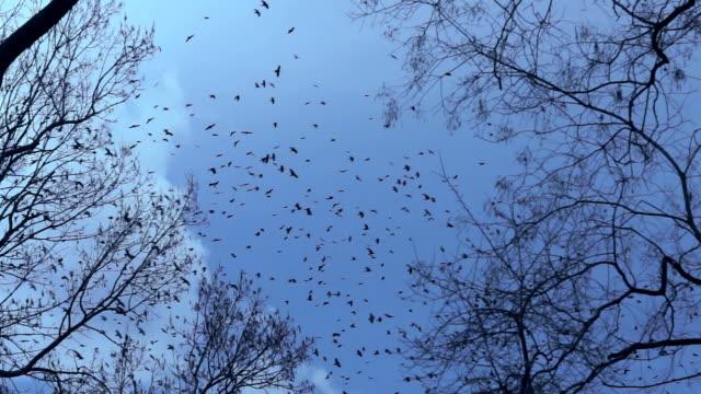鳥の一群の後には、ツリートップスの夕日 - 梢点の映像素材/bロール