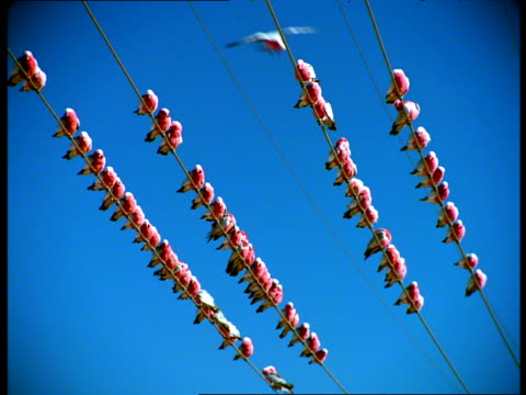 A flock of birds perches on power lines.