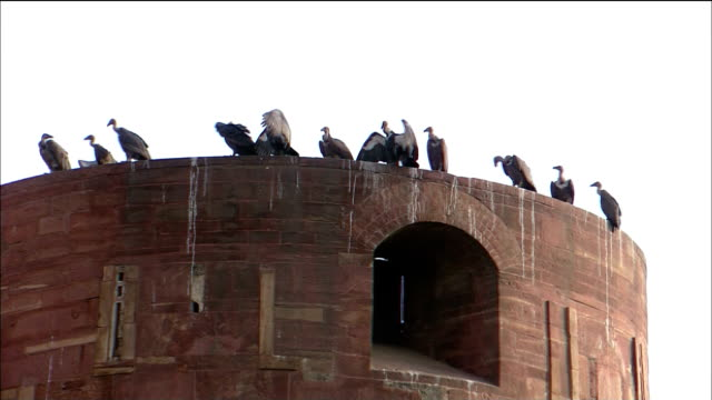 A flock of birds sit perched on a tower of the Agra Fort.