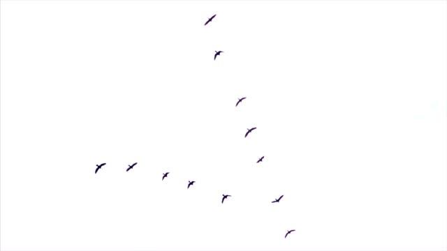 flock of birds - flock of birds stock videos & royalty-free footage