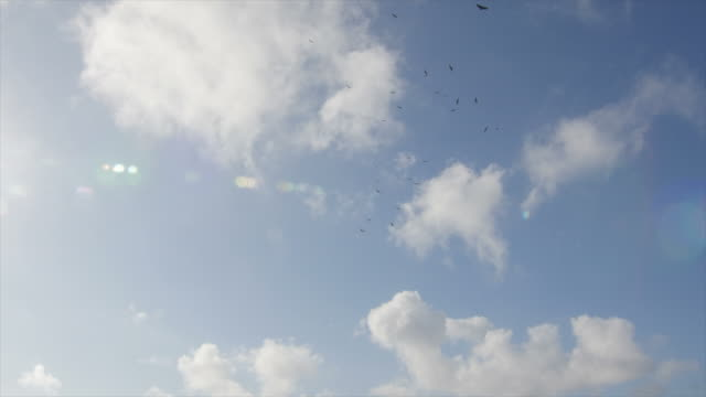 Flock of Birds Vulture Flying in Sky