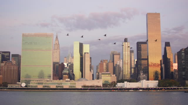 flock of candian geese flying past midtown manhattan skyline at dawn. new york city. - united nations building stock videos and b-roll footage