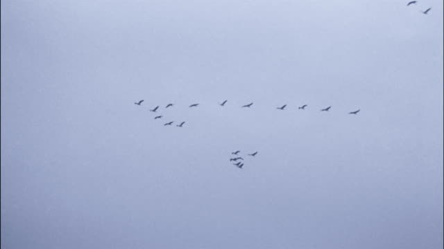 a flock of cranes flies in formation. - animal markings stock videos & royalty-free footage