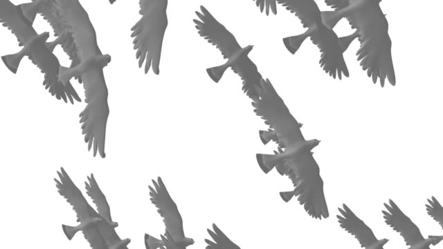 flock of doves - flock of birds stock videos & royalty-free footage