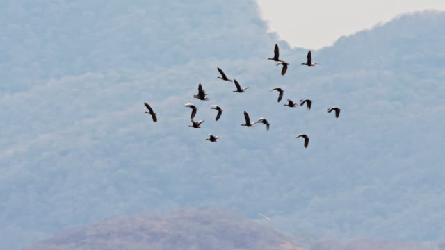 slo mo flock of ducks flying away - duck stock videos & royalty-free footage
