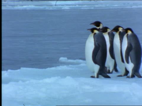 flock of emperor penguins entering water / antarctica - 2001 stock-videos und b-roll-filmmaterial