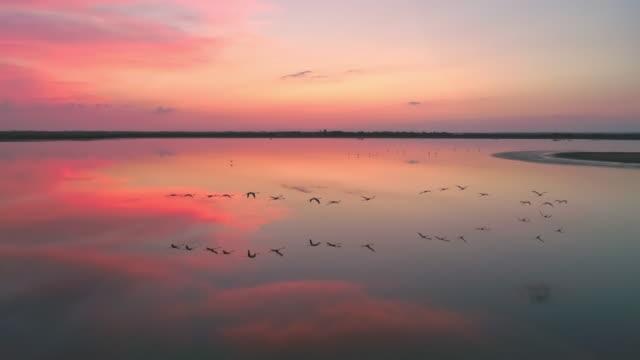 aerial slo mo flock von flamingos fliegen in der dämmerung - pelikan stock-videos und b-roll-filmmaterial