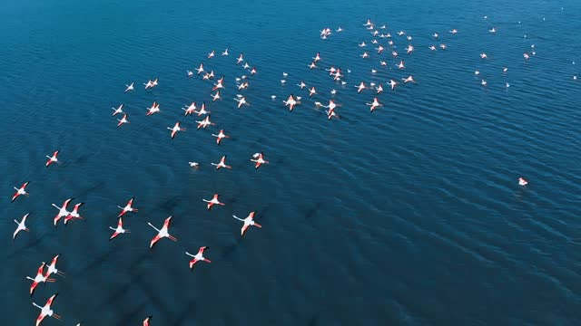 flock of flamingos - colony group of animals stock videos & royalty-free footage