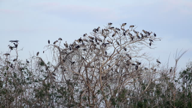 flock of great egrets - great egret stock videos and b-roll footage