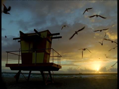 flock of gulls and lifeguard hut at sunrise, miami beach - cabina del guardaspiaggia video stock e b–roll