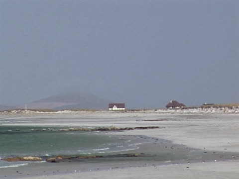 flock of oyster catchers, pan down, homes and hills in distance, combing the beach, protection, hunting - medium group of animals stock videos & royalty-free footage