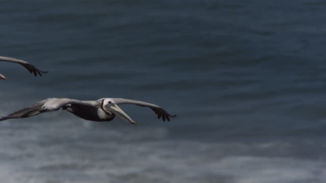 a flock of pelicans flies over white-capped waves. - pelican stock videos & royalty-free footage
