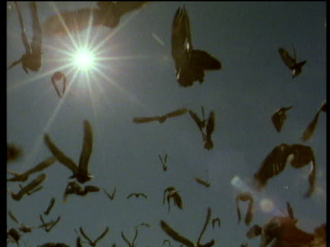 flock of pigeons fly towards blue sky silhouetted by bright sun in background - colomba video stock e b–roll