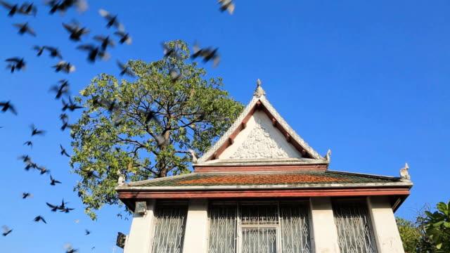 vídeos y material grabado en eventos de stock de parvada de palomas volando sobre un gran árbol y una iglesia - boca de animal
