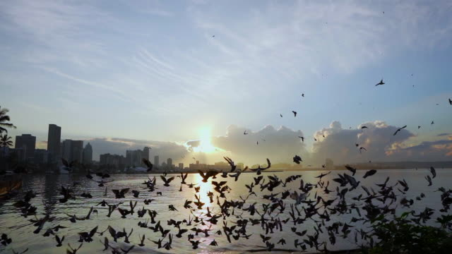 a flock of pigeons flying over the ocean with durban in the background - 南アフリカ共和国点の映像素材/bロール