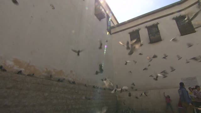 Flock of pigeons flying up into air at Temple of Jupiter ruins in Damascus Syria