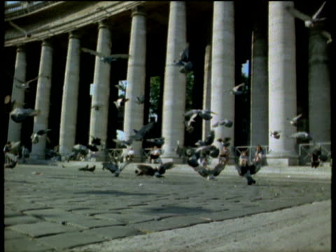 flock of pigeons gently land by basilica columns in st peter's square tourists sitting in background rome - サンピエトロ広場点の映像素材/bロール