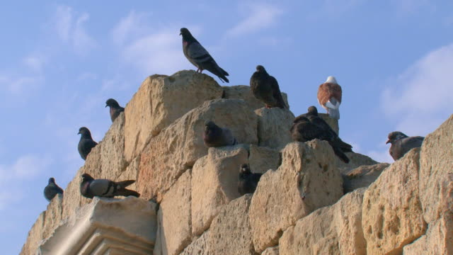 stockvideo's en b-roll-footage met flock of pigeons on the ruins - geruïneerd