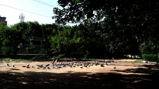 鳩の群れ - 道ばた点の映像素材/bロール
