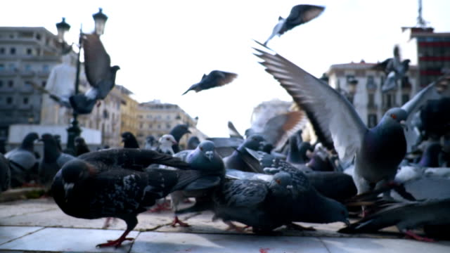 flock of pigeons - animal wing stock videos & royalty-free footage