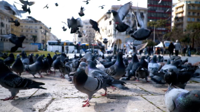 flock of pigeons - crumb stock videos and b-roll footage