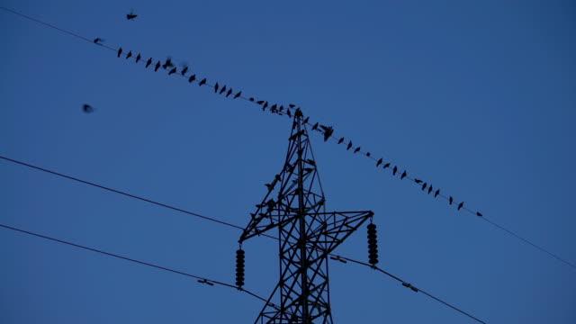 flock of ravens flying