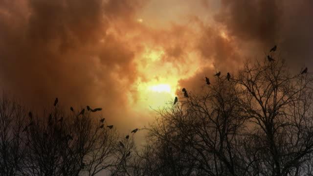 Flock of ravens sitting on trees