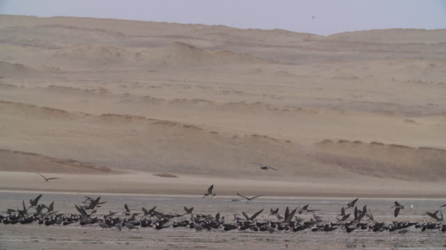 Flock of Seabirds After Landing on Peruvian Coast