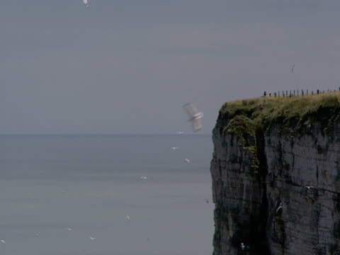 vidéos et rushes de flock of seabirds, flying around cliff top, blue sky and sea, peaceful, tranquil - groupe moyen d'animaux