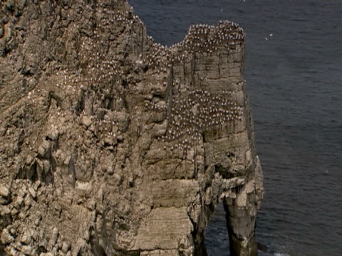 flock of seabirds, pan up, flying, waves breaking on foot of cliff, rocky coastline, family, protection, family - ベンプトン点の映像素材/bロール
