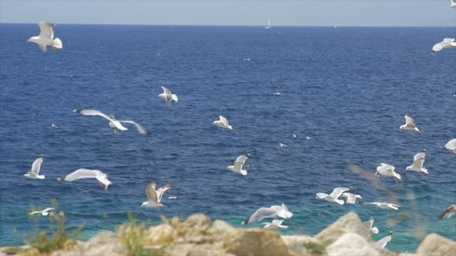 a flock of seagull birds flying against the wind. - slow motion - greece stock videos & royalty-free footage