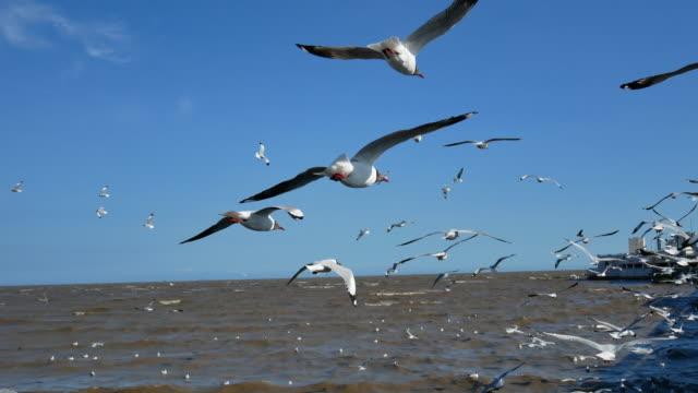 vídeos de stock, filmes e b-roll de rebanho de gaivota voando sobre fruits 4k - bando de pássaros