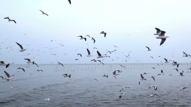 vídeos de stock, filmes e b-roll de bando de gaivota voando sobre a paisagem marinha - bando de pássaros