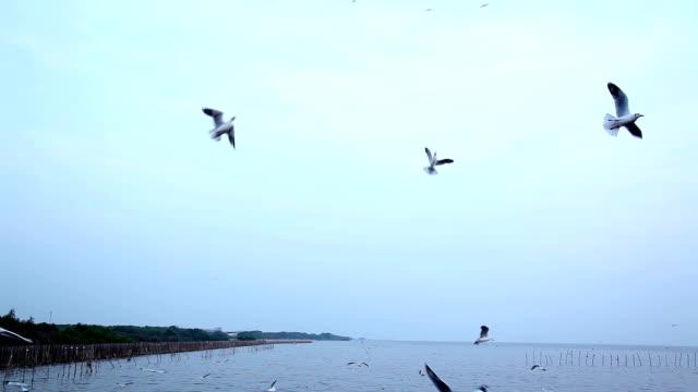 Flock of Seagull flying over seascape
