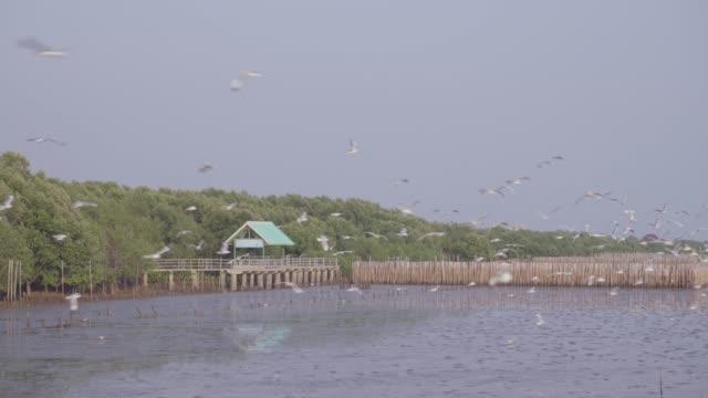 stockvideo's en b-roll-footage met kudde van zeemeeuw, vliegen over zeegezicht - lichaamsdeel van dieren