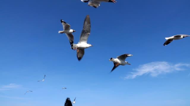 シースケープ、スローモーション上空を飛ぶカモメの群れ - カモメ科点の映像素材/bロール