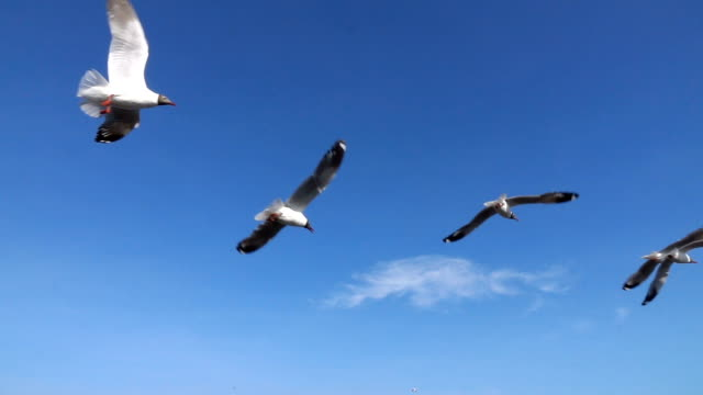 flock of seagull flying over seascape,slow motion - seagull stock videos & royalty-free footage
