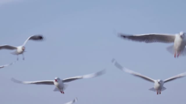 flock of seagull flying over seascape,slow motion - seagull stock videos and b-roll footage