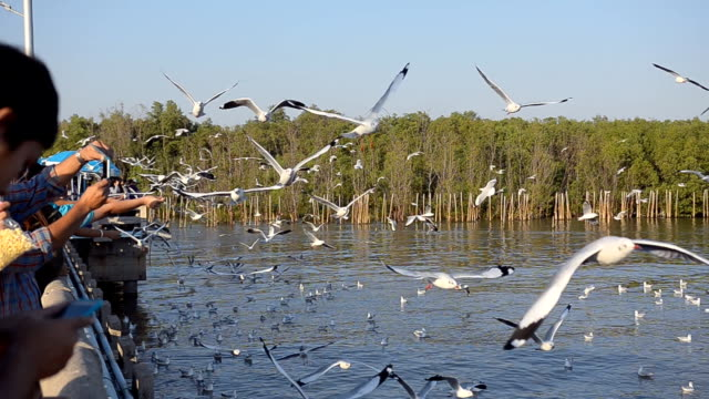 flock of seagull on a port behind mangrove forest - flock of birds stock videos & royalty-free footage