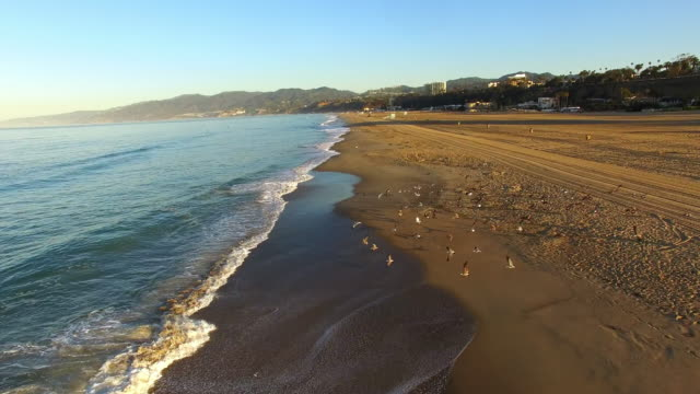 サンタモニカーのビーチでのカモメの群れを空中